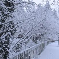 1380244_snowy_winter_scenery-207x207